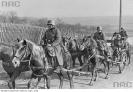 Niemiecka artyleria konna w marszu