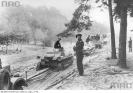 Pułk czołgów niemieckich na leśnej drodze